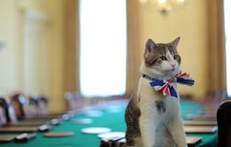 Larry - Chú mèo quyền lực của Dinh Thủ tướng Anh