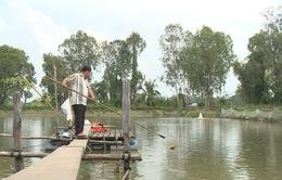 Doanh nghiệp bỏ trốn, người nuôi cá tra lâm nợ