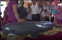 Ngư dân Tiền Giang phát hiện xác cá voi trôi dạt trên biển