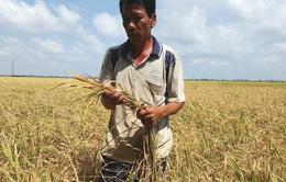 Thanh Hóa: Hàng ngàn ha cây trồng có nguy cơ bị chết bởi hạn mặn