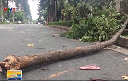 TP.HCM: Bị nhánh cây rơi trúng, nữ công nhân nguy kịch