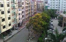 Thay thế cây xanh trên các tuyến phố chính ở TP Hạ Long
