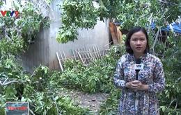 TP.HCM: Cây xanh bật gốc làm sập 4 ngôi nhà