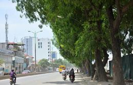 Hà Nội sẽ chặt hạ, di chuyển 1.300 cây xanh để mở đường