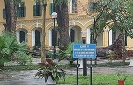 Hà Nội: Nhiều cây đổ gục do mưa dông