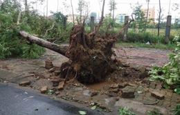 Hà Tĩnh: Thiệt hại do bão số 2 gây ra gần 500 tỷ đồng