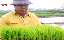 Thái Bình: Một người nông dân sở hữu máy cấy 40 sào/ngày