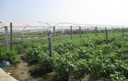 Khánh Hòa chuyển đổi cơ cấu gần 6.000 ha cây trồng