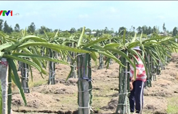 Giải pháp khắc phục tình trạng thiếu nước, mặn xâm nhập ở Tiền Giang