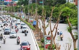 Hà Nội quyết tâm trồng mới 1 triệu cây xanh đến năm 2020