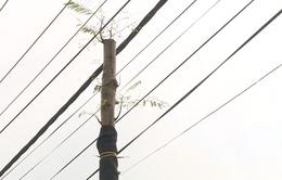 Hà Nội: Cây xanh vừa trồng đã vướng đường dây diện