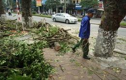 Hà Nội tiếp tục dời 130 cây xanh để làm đường sắt đô thị
