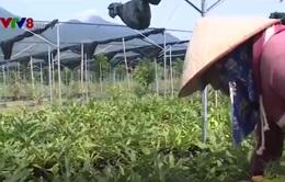 Quảng Trị: Dự án nông nghiệp 37 triệu USD có nguy cơ phá sản