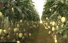 Lâm Đồng: Nhập khẩu hơn 90% cây giống nông nghiệp công nghệ cao