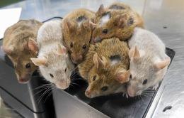Hàn Quốc nghiên cứu vi khuẩn biến đổi gen chống ung thư