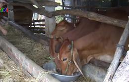 Chăn nuôi gia súc thích ứng biến đổi khí hậu