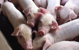 Đồng Nai bình ổn giá, giải cứu ngành chăn nuôi