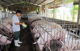 Đồng Nai cơ cấu lại khoản nợ 28 tỷ đồng cho chăn nuôi lợn