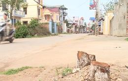 Kiến nghị Hà Nội xử lý tập thể, cá nhân vụ chặt cây xanh trên vỉa hè
