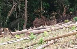 Cả nước có hơn 7.800 vụ chặt phá rừng trong 5 tháng đầu năm