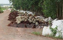 Điều tra vụ đổ hàng ngàn bao chất thải giữa rừng tràm Đồng Nai