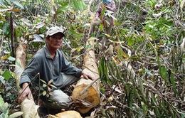 Thanh tra chuyển đổi mục đích sử dụng rừng tại Phú Yên