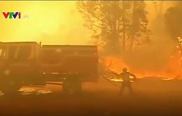 Chile ban bố lệnh báo động đỏ do cháy rừng thiêu rụi hơn 50ha