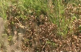 Cà Mau chủ động phòng chống cháy rừng mùa khô