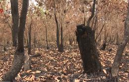 Cảnh báo nguy cơ cháy rừng do bất cẩn tại An Giang