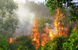 Mưa lớn diện rộng làm giảm nguy cơ cháy rừng ở Vĩnh Phúc
