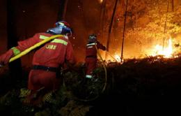 Cơ bản khống chế vụ cháy rừng ở Tây Ban Nha và Bồ Đào Nha