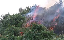 Cảnh báo cháy rừng ở miền Bắc, miền Trung