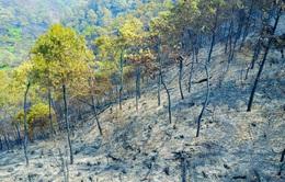 Cháy rừng tại Sóc Sơn, Hà Nội: Ứng trực tránh lửa bùng phát trở lại