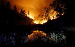 Cháy rừng ở Bồ Đào Nha: Số người thương vong đã lên tới hơn 100