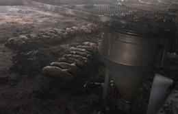 Cháy trang trại chăn nuôi, 1.000 con lợn chết ngạt