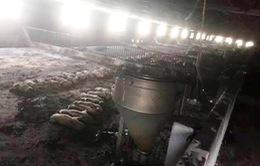 Hỏa hoạn tại trang trại ở Gia Lai, hơn 1.000 con lợn bị chết ngạt