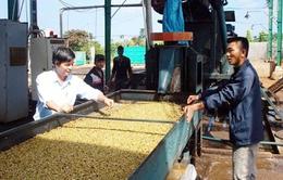 Đẩy mạnh chế biến sâu nông sản tại Tây Nguyên
