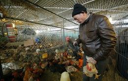 Trung Quốc: Phát hiện ca nhiễm cúm A/H7N9 tại địa phương giáp Việt Nam