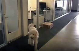 Mỹ: Nhân viên được đưa chó tới nơi làm việc