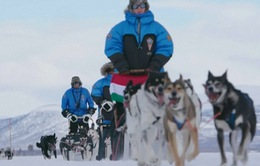 Thám hiểm thiên nhiên hoang dã với những chú chó kéo xe tuyết