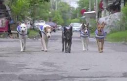 Chó hoang bảo vệ trật tự tại thủ đô Bangkok bằng... bộ phát wifi và 4G
