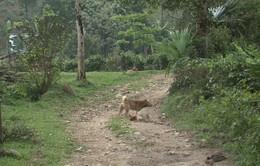Đắk Lắk: Trường hợp thứ 6 tử vong do bệnh dại