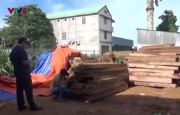 Công an Quảng Ngãi tạm giữ xe ô tô chở gỗ không đúng quy định
