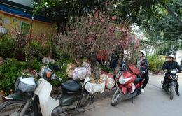 Tấp nập chợ hoa Hà Nội ngày giáp Tết
