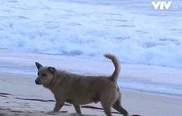 Nỗ lực ngăn chặn bệnh dại và giảm số lượng chó hoang tại Thái Lan