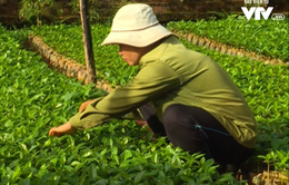 Đẩy nhanh tiến độ dự án chuyển đổi nông nghiệp bền vững