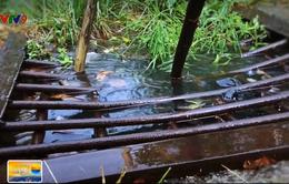 Cần Thơ: Tắc nghẽn với rác, sình lầy, cống thoát nước có như không