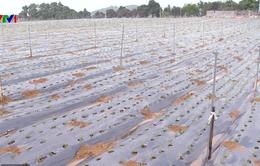 Quy định về tiêu chí dự án nông nghiệp công nghệ cao