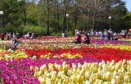 Du lịch hoa Đà Lạt - Điểm đến hấp dẫn du khách ở mọi lứa tuổi