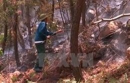 Cảnh báo cháy rừng ở Bắc Bộ và Trung Bộ